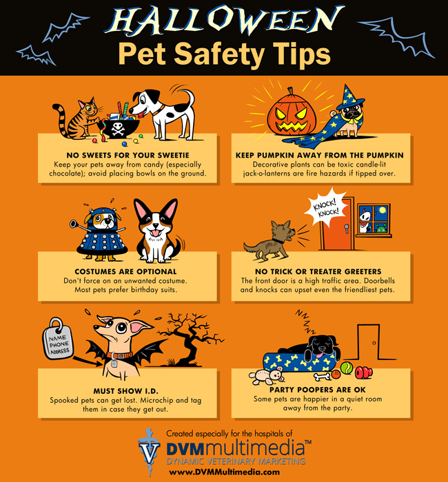 How To Keep Pets Safe During Halloween 2020 News   Halloween Safety Tips for Pets!